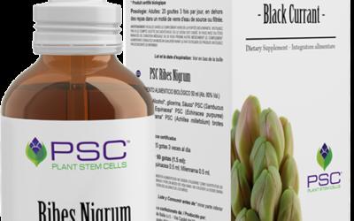 PSC Ribes nigrum