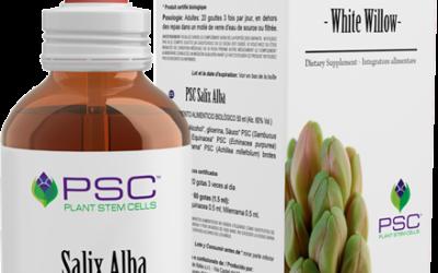 PSC Salix alba